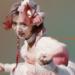 【au】親指姫役は池田エライザ!役柄や経歴・プロフィール